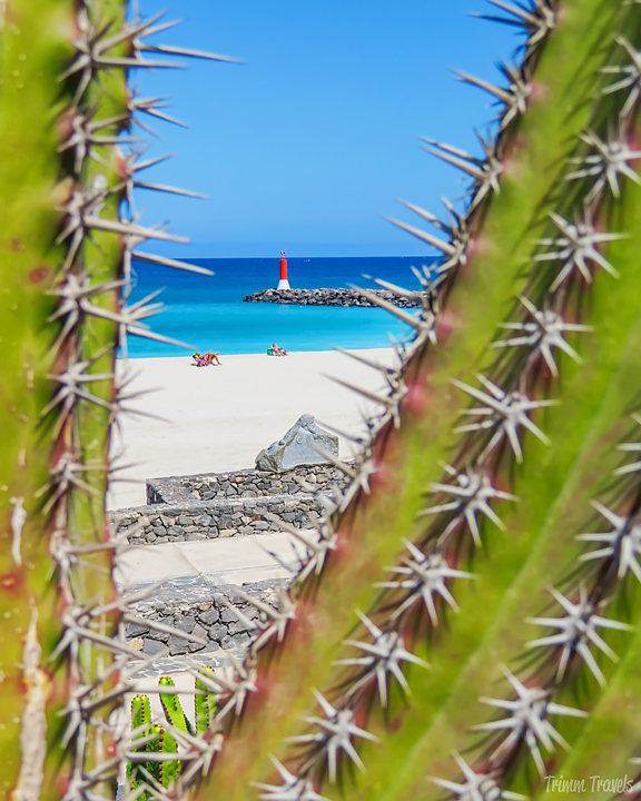 looking at turquoise ocean through the v-shaped opening of a cactus