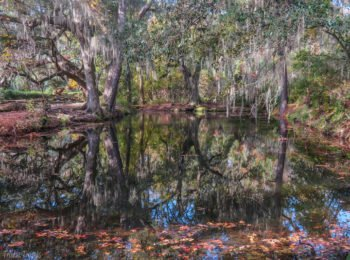 Magnolia Plantation & Gardens: A Winter Tour in Charleston
