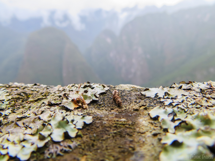 macro shot of greenery and dirt on the edge of a cliff in machu picchu peru